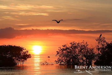 Forever Sunset - Islamorada Key, FL