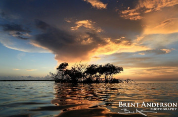 Mangrove Sunset - Marathon Key, FL
