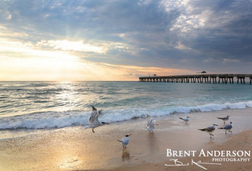 Gull Sunrise - Palm Beach, FL