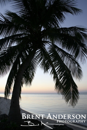 Palm-Tree-Sunset