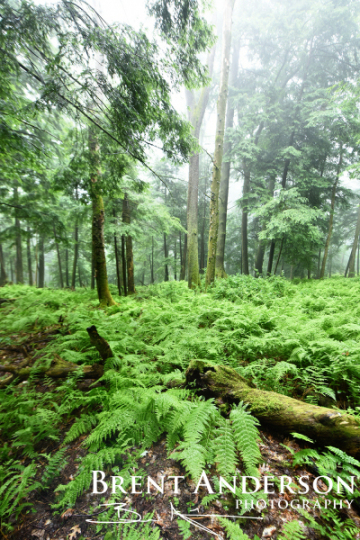 1_Forest-of-Green
