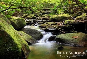 Mossy-Rock-Falls