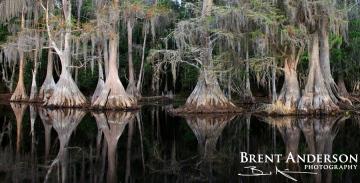 Cypress Reflect - Brick Lake, Osceola, FL