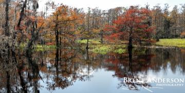 Autumn Cypress 2 - Marian Lake Creek, FL