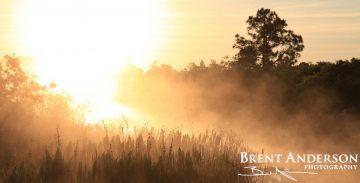 Misty Sunrise - Osceola, FL