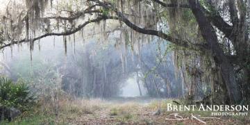 Mystic Path - Highlands, FL
