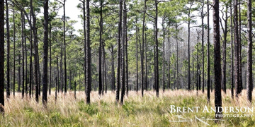 Pines - Osceola, FL