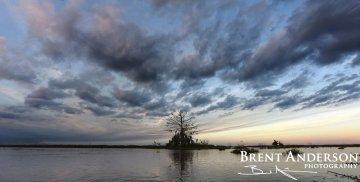 Silent Cypress - Kissimmee River, Okeechobee, FL