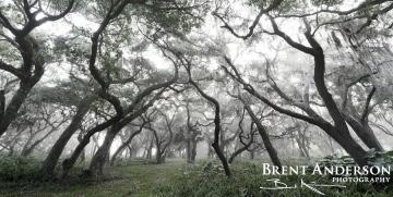 Silver Forest - Kissimmee River, Okeechobee, FL