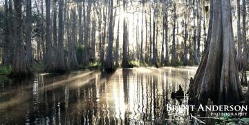 Sunburst Cypress 1 - Marian Lake Creek, Osceola, FL