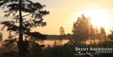Cypress Sunrise - Osceola, FL