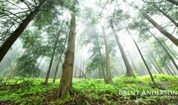 Towering-Pines-Pan