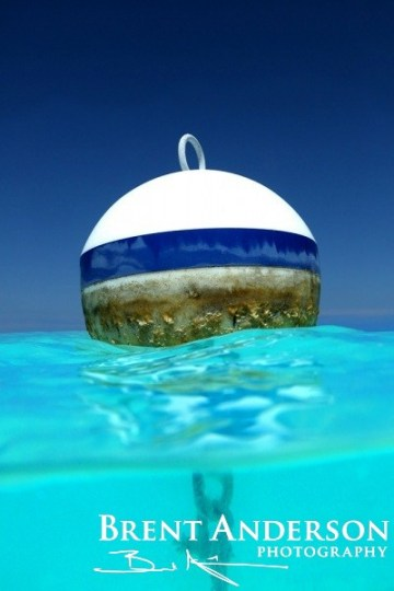 Blue Buoy - Treasure Island, Abacos