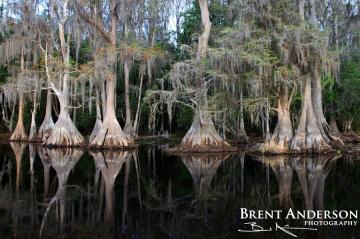 Cypress Reflect, Brick Lake, Osceola, FL