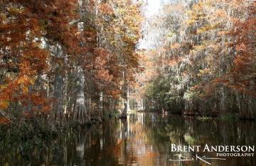 Autumn Cypress 1 - Marian Lake Creek, Osceola, FL