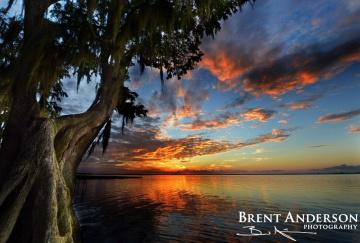 Sunset Cypress - Lake Istokpoga, Highlands, FL