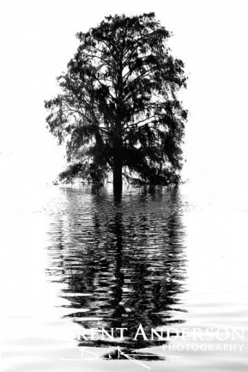Cypress Silhouette - Kissimmee River, Okeechobee, FL