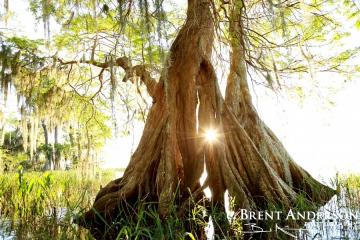 Sunburst Cypress 2 - Lake Istokpoga, Highlands, FL
