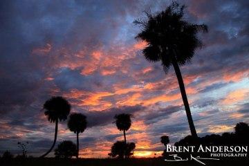Kissimmee Palms Sunset - Okeechobee, FL
