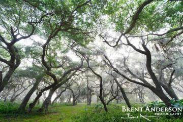 Silver Forest 2 - Kissimmee River, Okeechobee, FL
