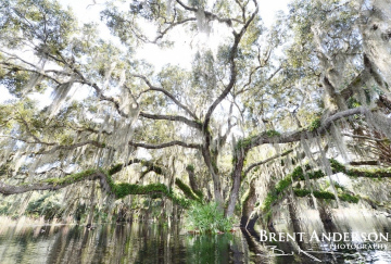 Angel on the Water - Kissimmee River, Okeechobee, FL