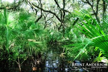 Flooded Oaks 3 - Kissimmee River, Okeechobee, FL