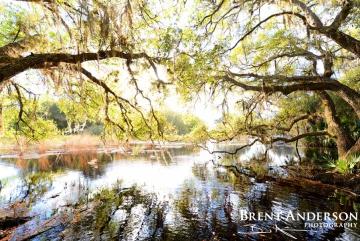 Flooded Oaks  4 - Kissimmee River, Okeechobee, FL
