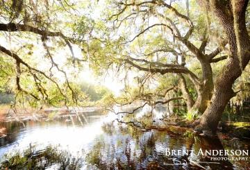 Flooded Oaks 5 - Kissimmee River, Okeechobee, FL