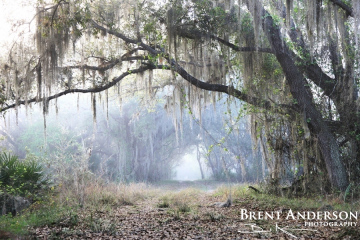 Mystic Path - Kissimmee River, Highlands, FL