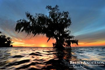 Lone Cypress - Lake Istokpoga, FL
