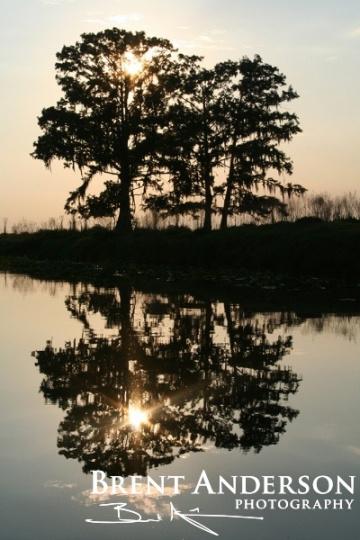 Mirrored Cypress - Kissimmee River, Okeechobee, FL