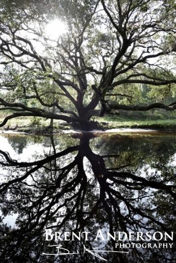 Oak Reflections - Arbuckle Creek, Highlands, FL