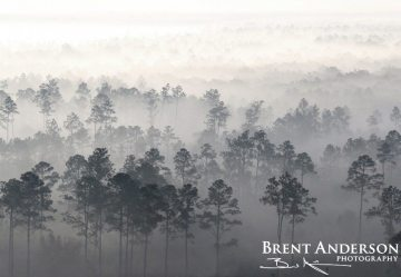 Pines in the Mist 1 - Highlands, FL