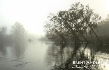 Slanted Cypress - Kissimmee River, Okeechobee, FL