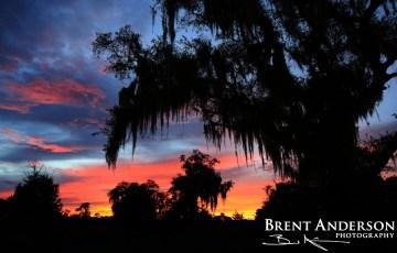 Spanish Moss Sunset - Kissimmee River, Highlands, FL