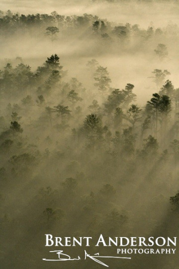 51.-Pines-in-the-Mist-2-web
