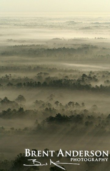 57.-Pines-in-the-Mist-3-web