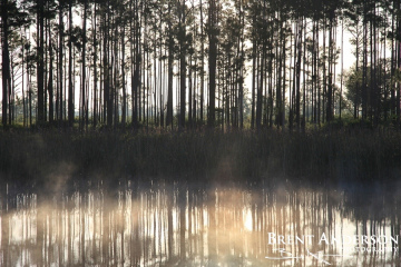 60.-Veritcal-Pine-Reflections-web
