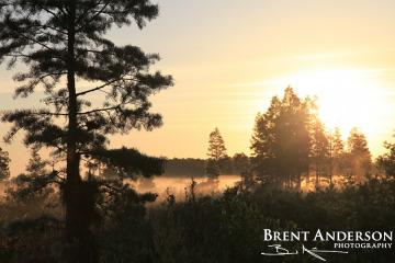62.-Cypress-Sunrise