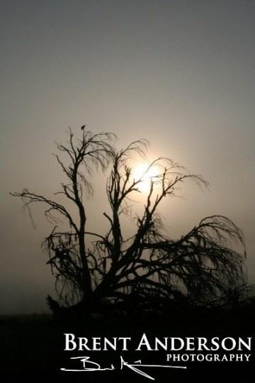 62.-Weathered-Oak-web