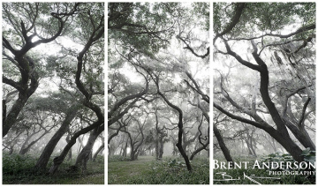 silver forest triptych
