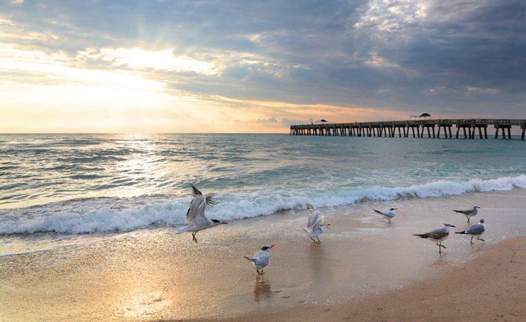 Gull Sunrise
