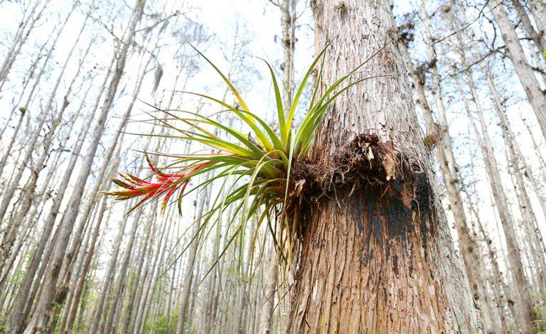 Macro Nature Photo Gallery