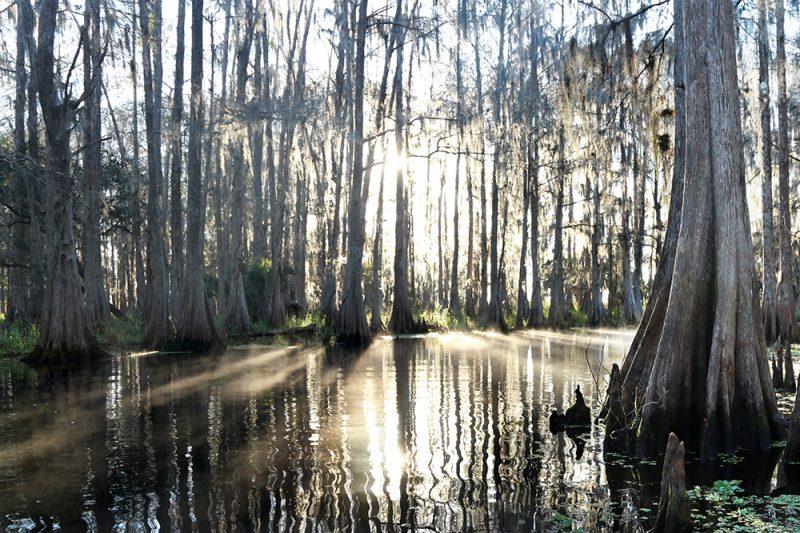 Northern Everglades 2
